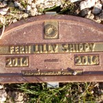 Fern Lilly Shippy